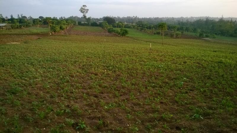Farm In Rwanda, with newly installed irrigation system